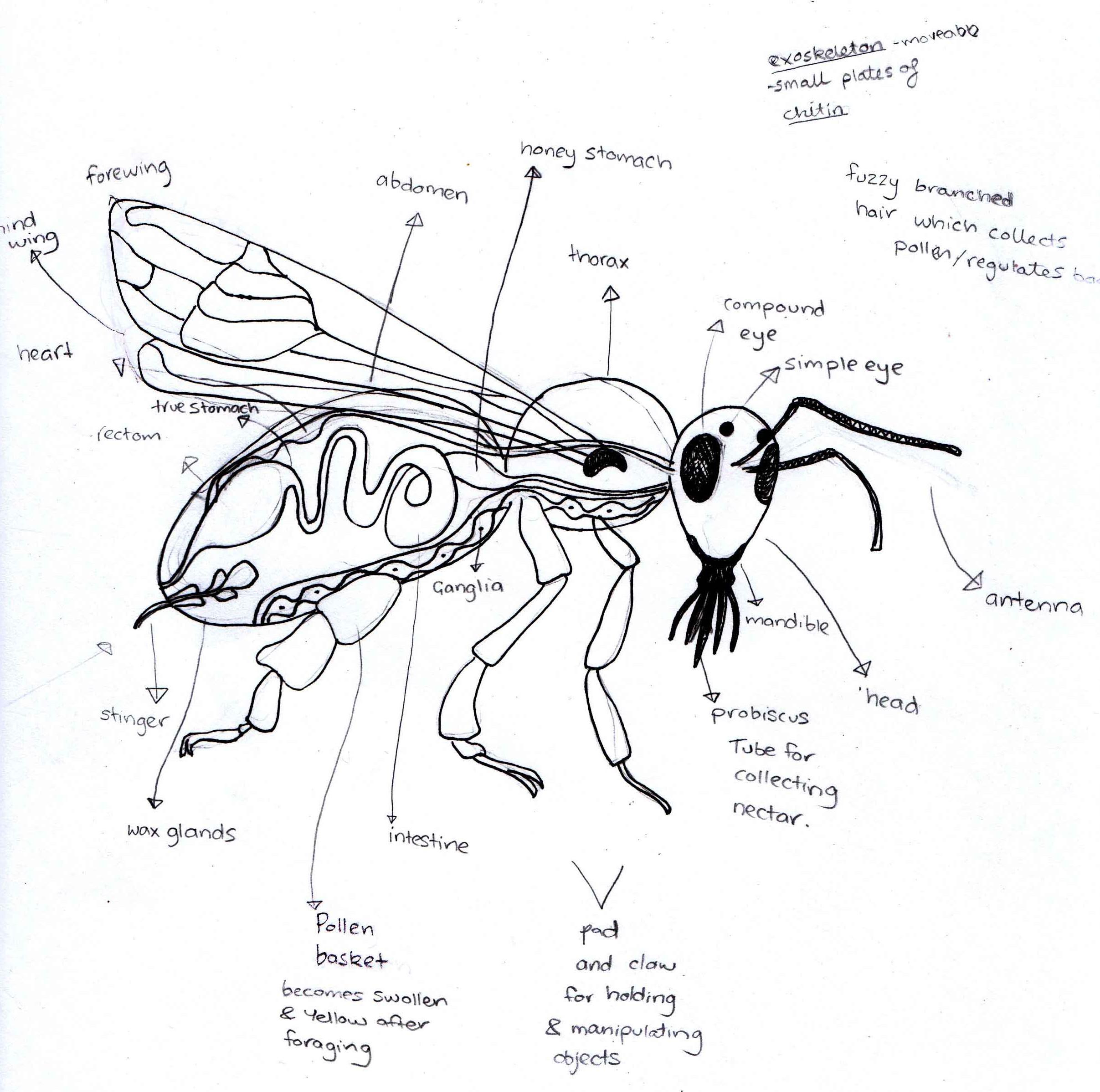 Honeybee Habits; research for prototype design |